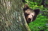 Erlebnisparadies Gorski Kotar - das Naturwunder an der kroatischen Adria