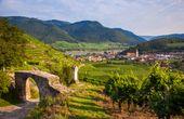 Sommerfrische 2020! Worauf wir uns in der Wachau wieder freuen