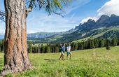 Wandern im Kräutergarten der Dolomiten